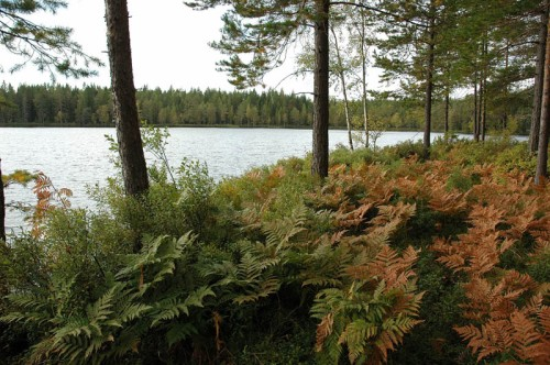 Höstprakt vid Lill-Målsjöns norra strand